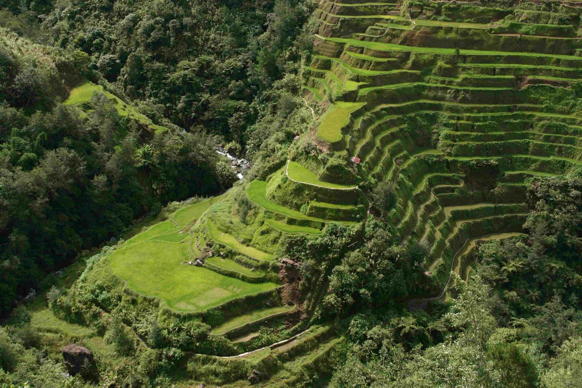 Closer View of the Banaue Rice Terraces, Agricmarkting.jpg